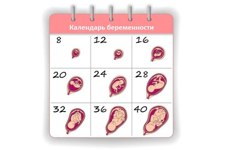 Календарь беременности по неделям